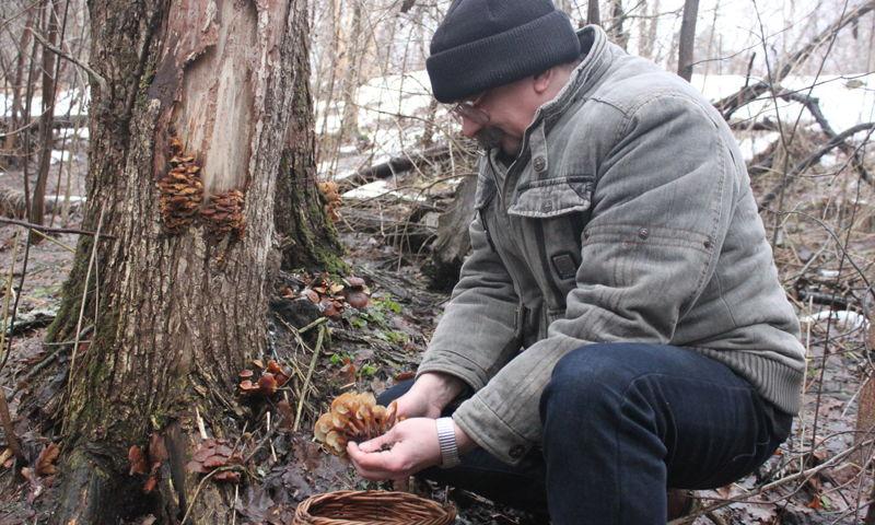 Дары январского леса.Первые грибы в наступившем году ярославцы собирали в новогодние каникулы