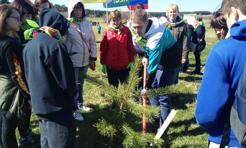 В Ярославской области высажен новый сосновый бор