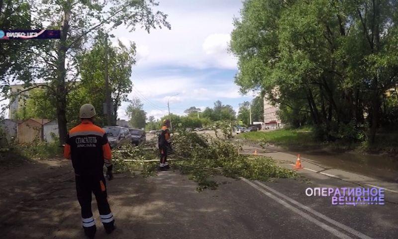 В Ярославле огромная упавшая ветка перегородила дорогу
