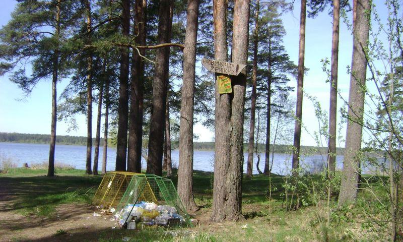 Нарушители режима особо охраняемой природной территории «Высоковский бор» в Рыбинском районе заплатят штраф
