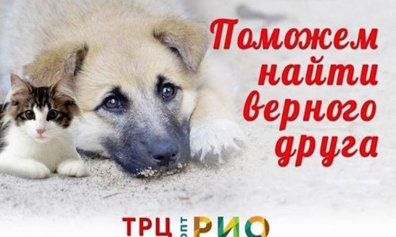 Ярославцы смогут бесплатно приобрести питомца