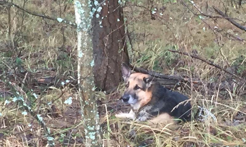 В Ярославле брошенному в лесу псу нашли новых хозяев
