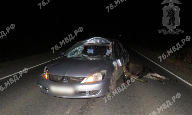 В Ярославской области мужчина на «Митсубиси» сбил лося