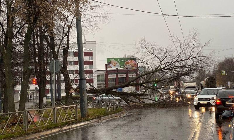 В Ярославле сильный ветер валил деревья и привел к перебоям в работе транспорта