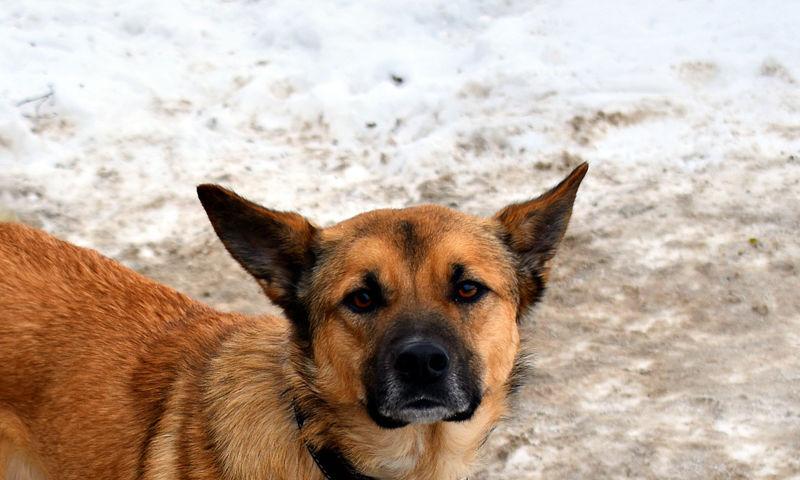 В Ярославской области обнаружили бешеную собаку