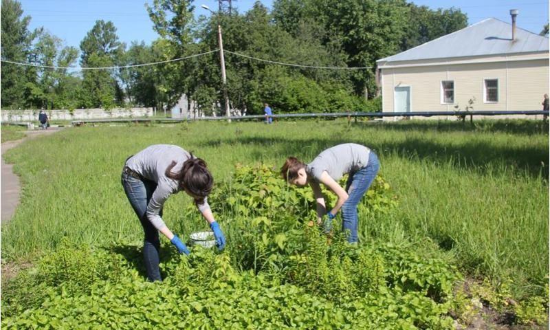 Сотни подростков в Ярославской области смогут трудоустроиться на время летних каникул