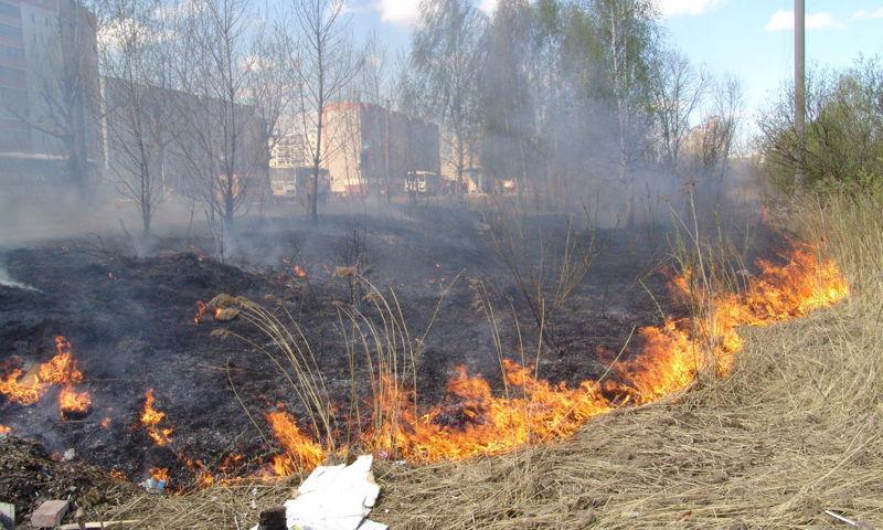 100 пожаров в день. Число выездов пожарных на тушение травы зашкаливает