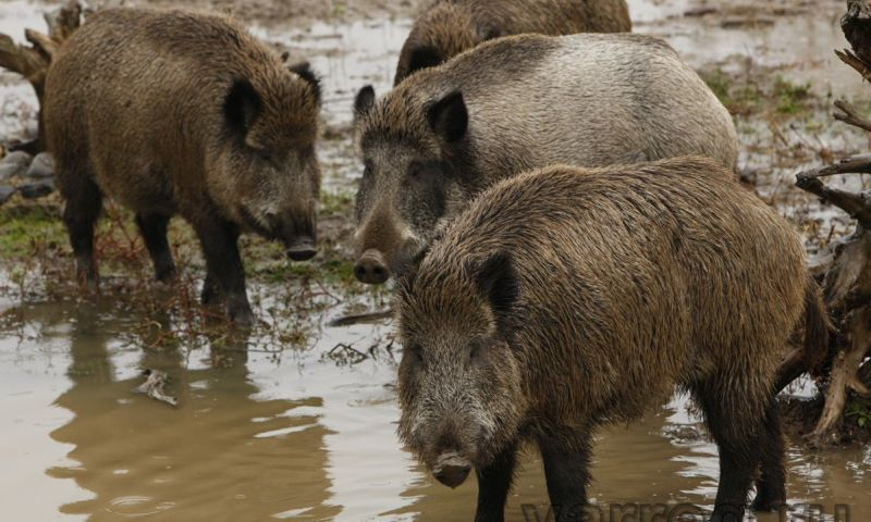 В Ярославской области открывается сезон охоты