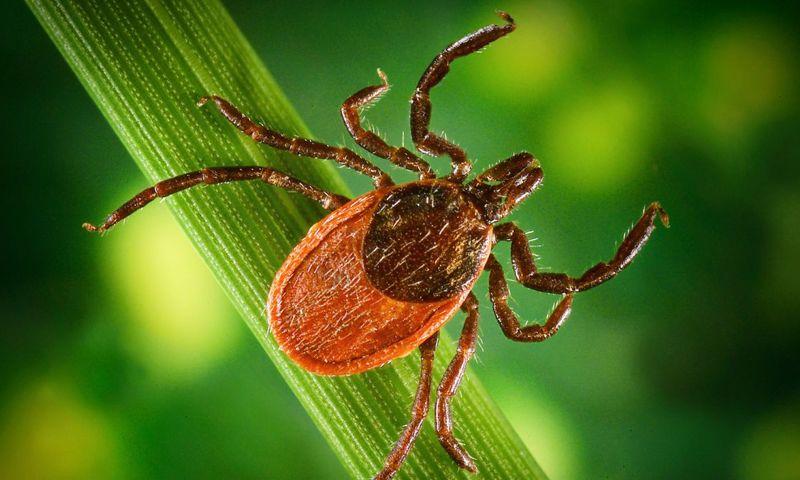 Более 6,5 тысячи ярославцев пострадали от укусов клещей