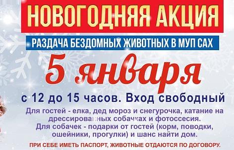 В Ярославле раздадут бездомных животных