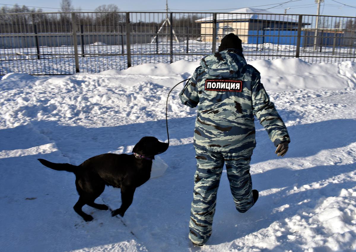Собачья работа: тонкости воспитания четвероногих полицейских в центре кинологической службы УМВД