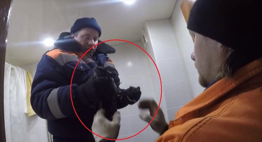 В Ярославле спасатели вытащили из дымохода галчонка