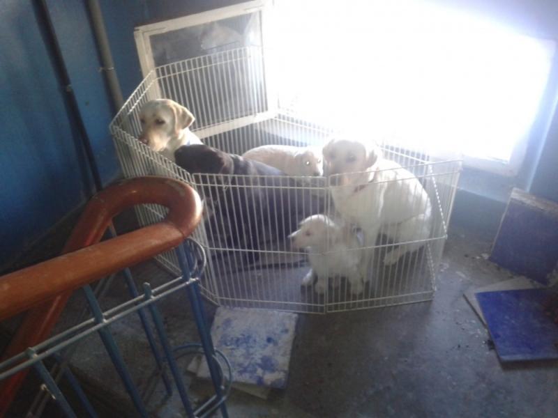 В Рыбинске в горящей квартире оказались закрыты пять породистых собак