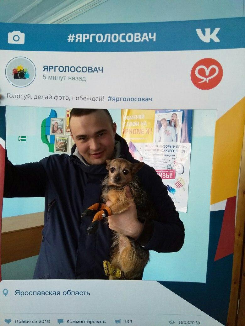 Ярославцы приходили на избирательные участки вместе с домашними питомцами: фоторепортаж