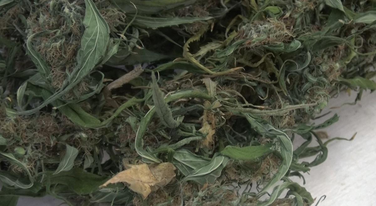 В Ярославской области мужчина в бане прятал 700 граммов марихуаны
