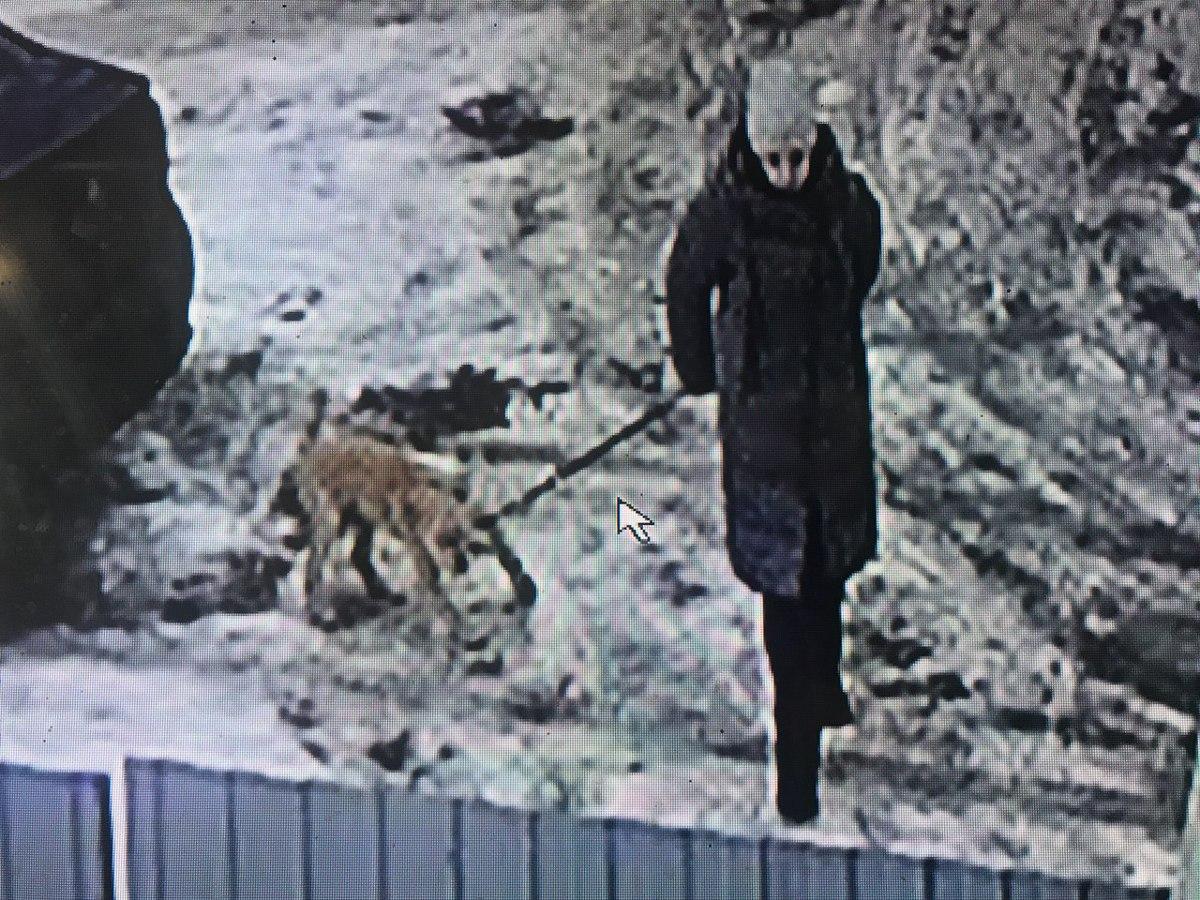 В Ярославле ищут женщину, подкинувшую собаку под чужую дверь