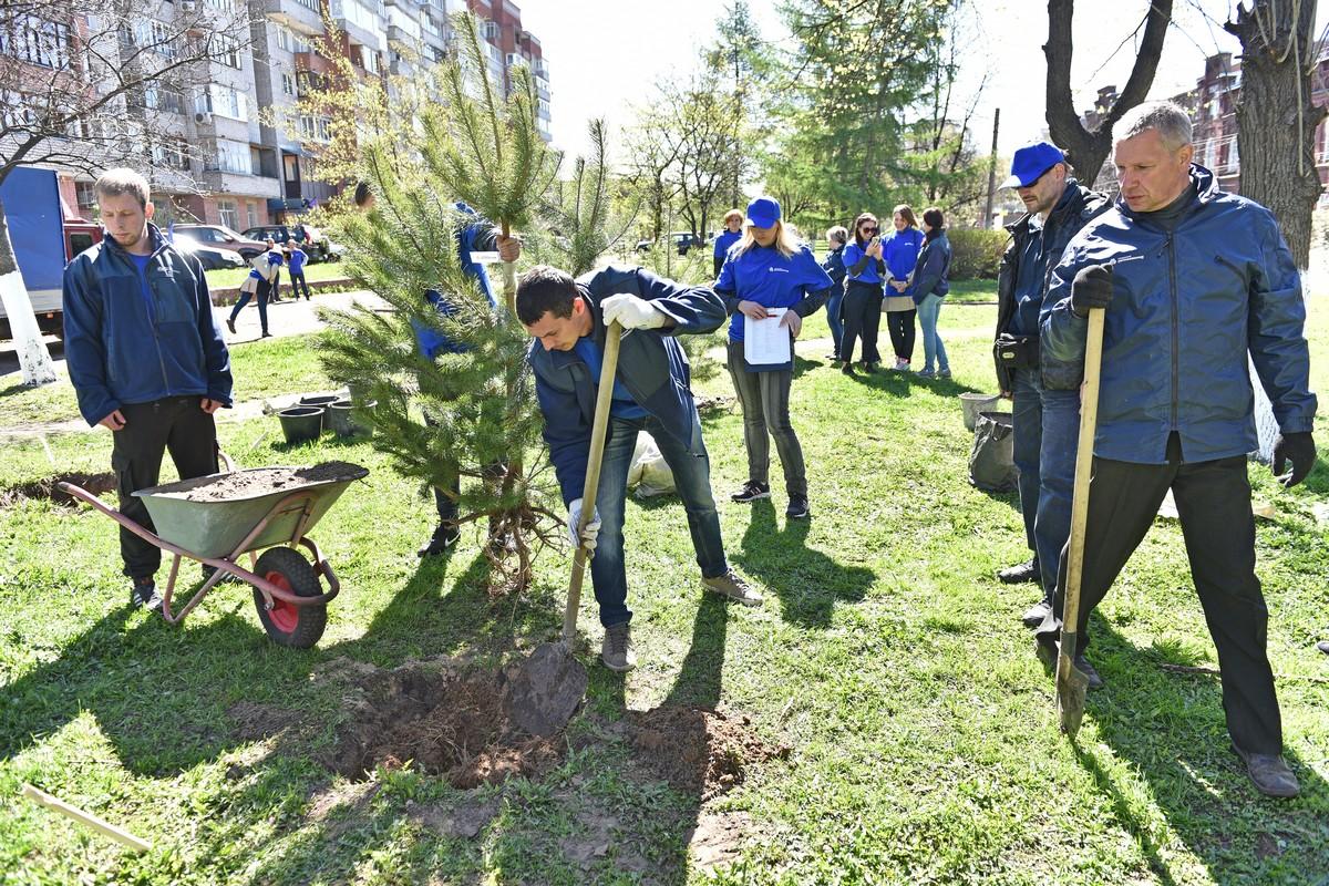В центре Ярославля посадили сосновую аллею