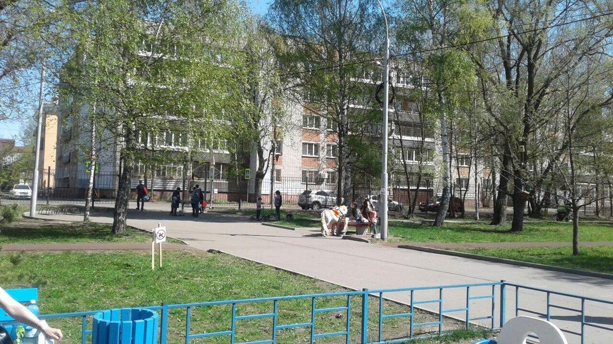 Мэр, не гони лошадей! Быть или не быть конным покатушкам в Ярославле