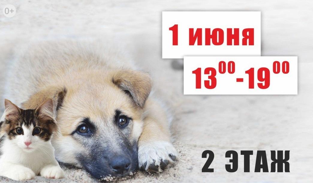 В Ярославле пройдет выставка-раздача бездомных животных