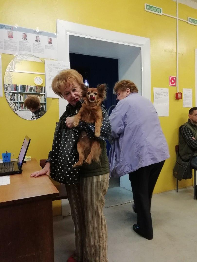 Трансформер, собачки и дешевые пирожки: как в Ярославской области проходит предварительное голосование