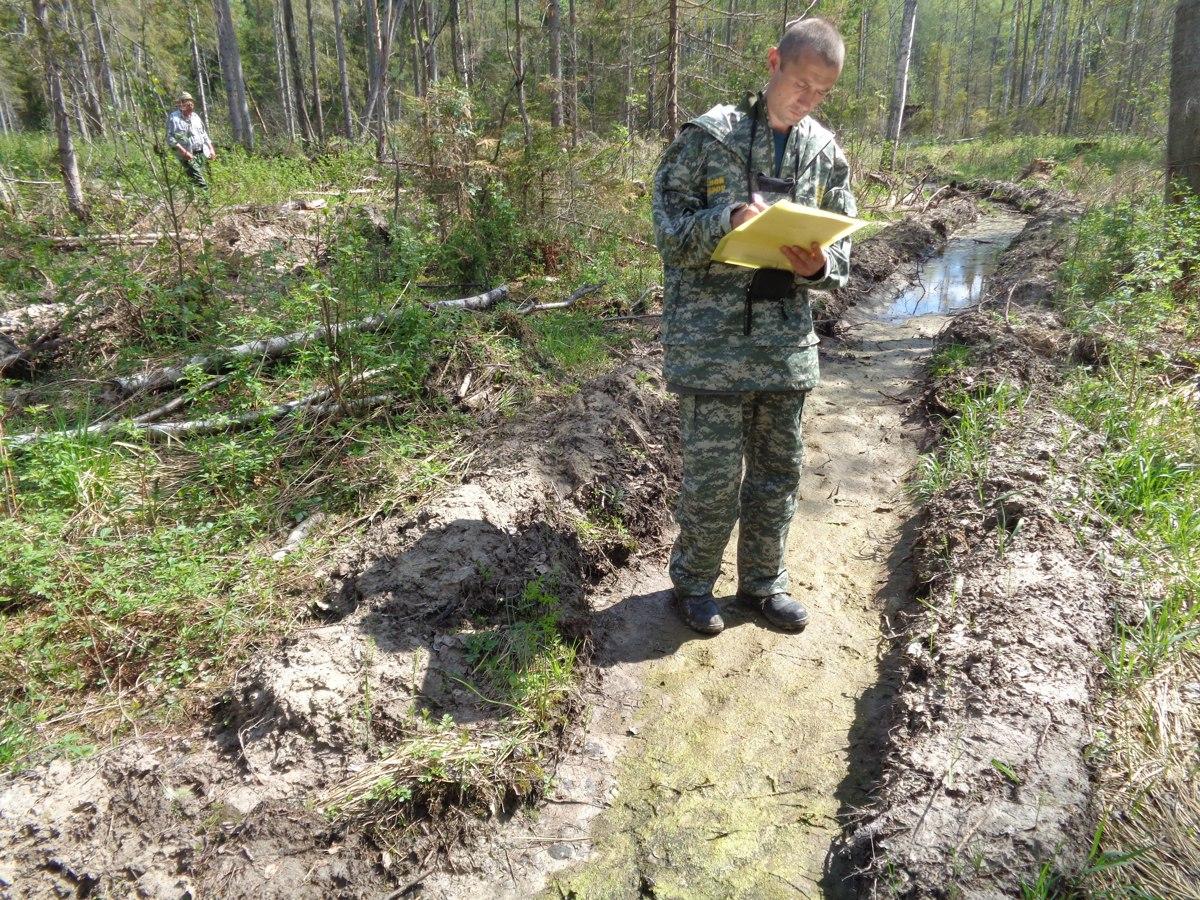 До конца года в лесах Ярославской области будет высажено 7,5 миллиона деревьев