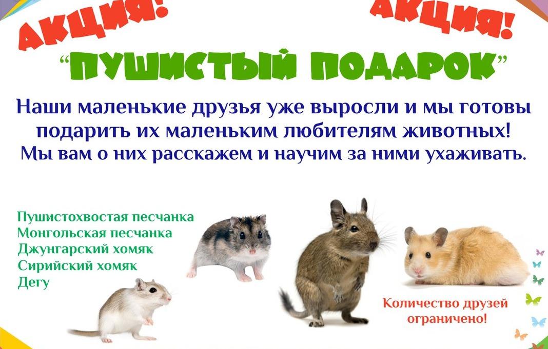 Ярославский зоопарк бесплатно раздает пушистых зверьков: как получить питомца