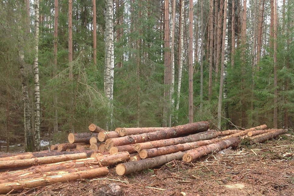 Доход бюджета за использование лесов в Ярославской области вырос в 2,5 раза