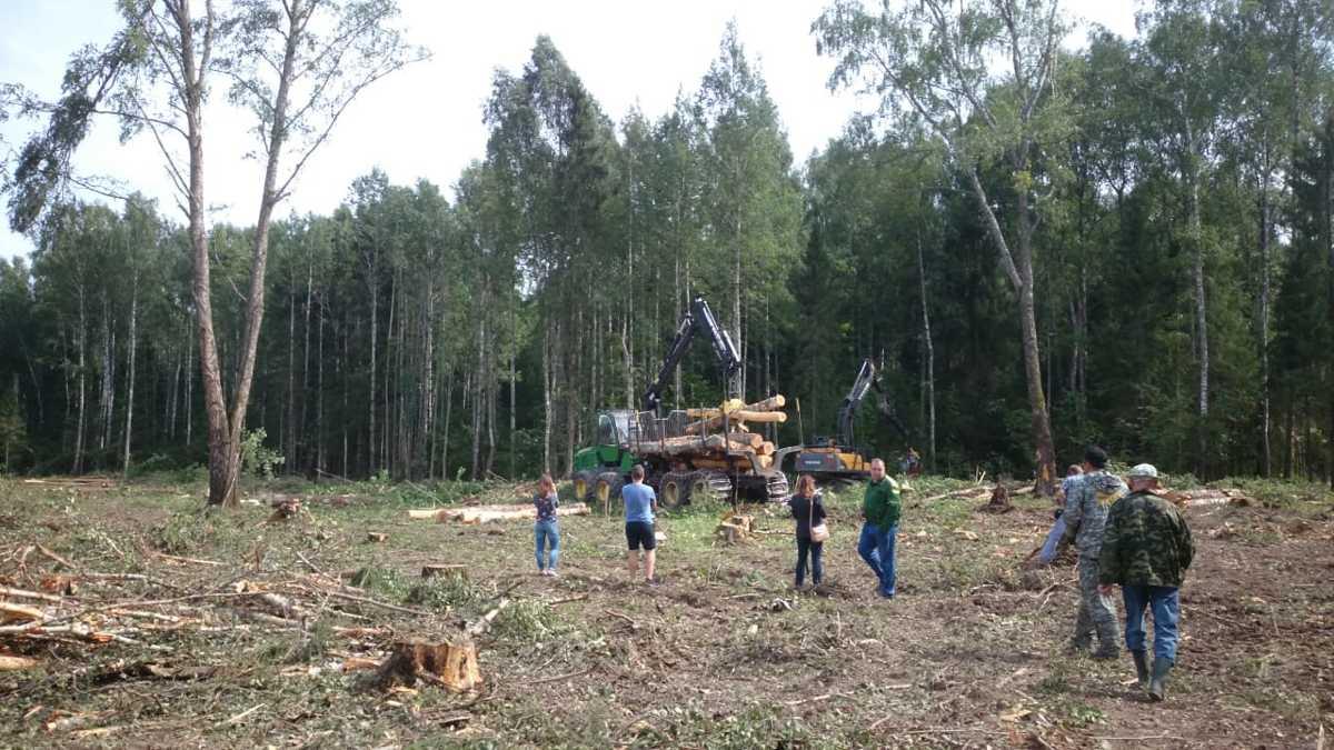 Эксперты предлагают включить в концепцию новой экологической политики работу по лесовосстановлению