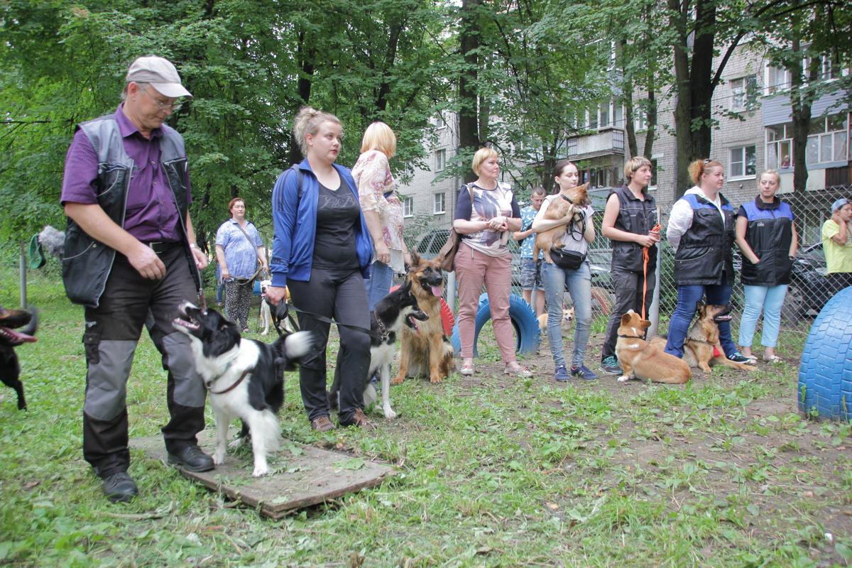В Ярославле появилась новая площадка для выгула собак