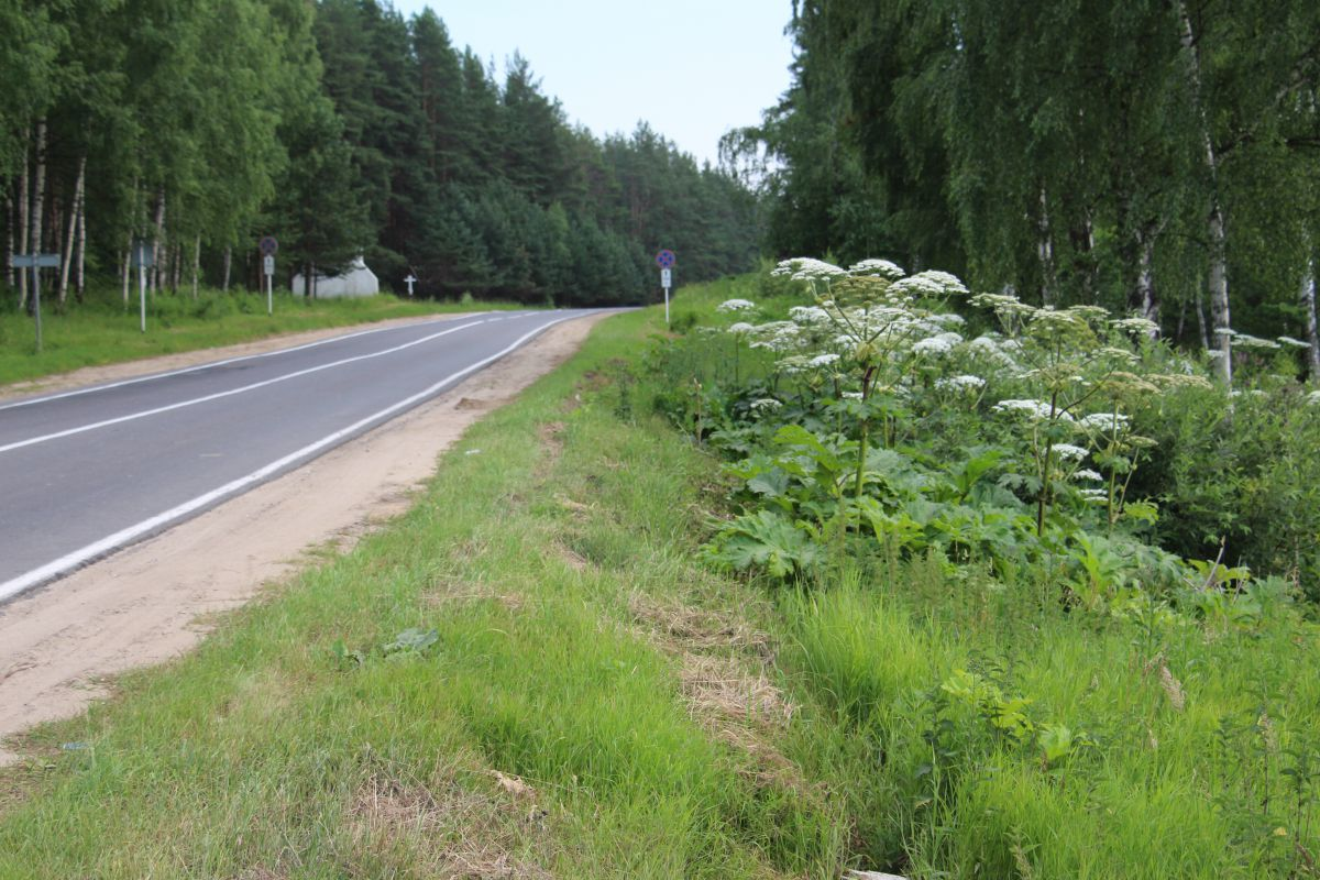 В Ярославской области будет создана программа борьбы с борщевиком