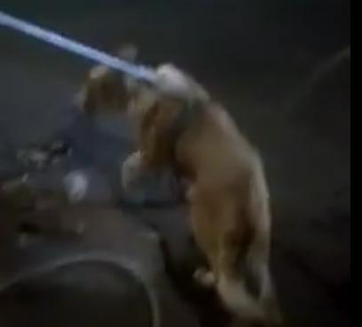 Ярославские спасатели вытащили собаку, провалившуюся под парковку: видео