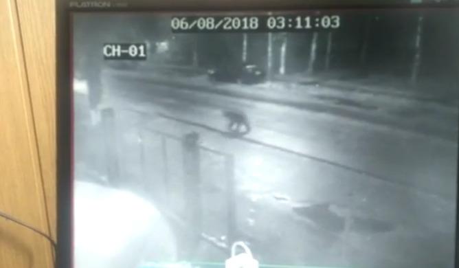 В Угличе по городу бегал медведь