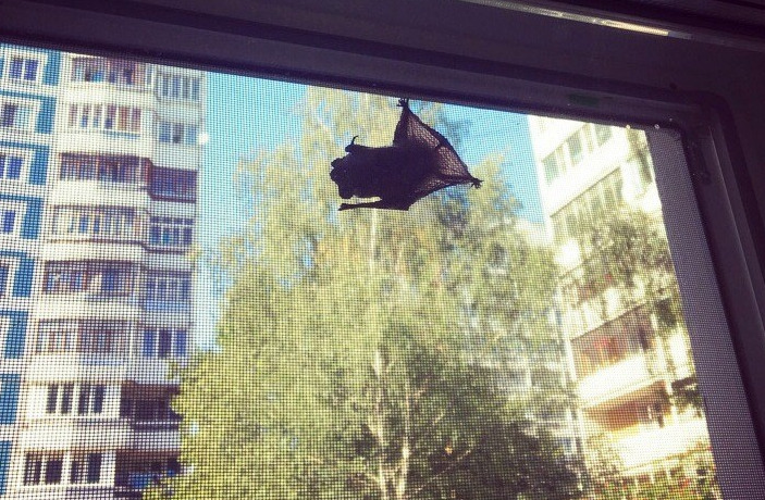 Ярославцев атакуют летучие мыши