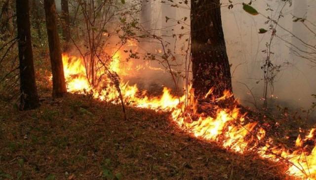 В Ярославской области горел лес на площади 3,5 гектара