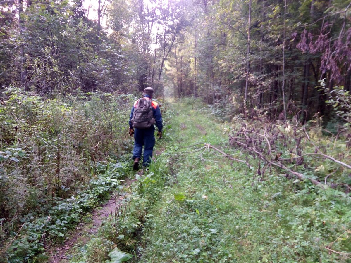Двое суток в лесу: в Ярославской области нашли заблудившегося 80-летнего грибника