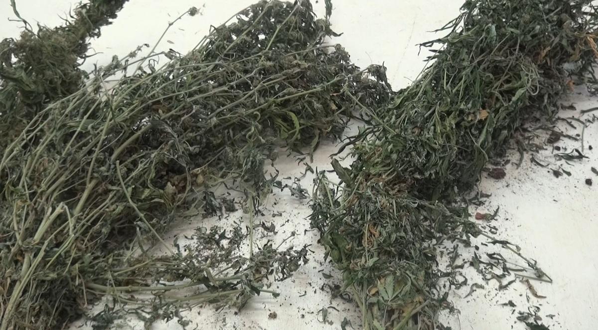 В Ярославской области у мужчины нашли почти два килограмма конопли