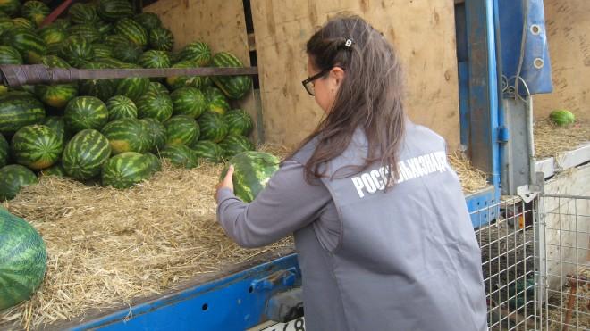 В Ярославль ввезли 30 тонн опасных арбузов