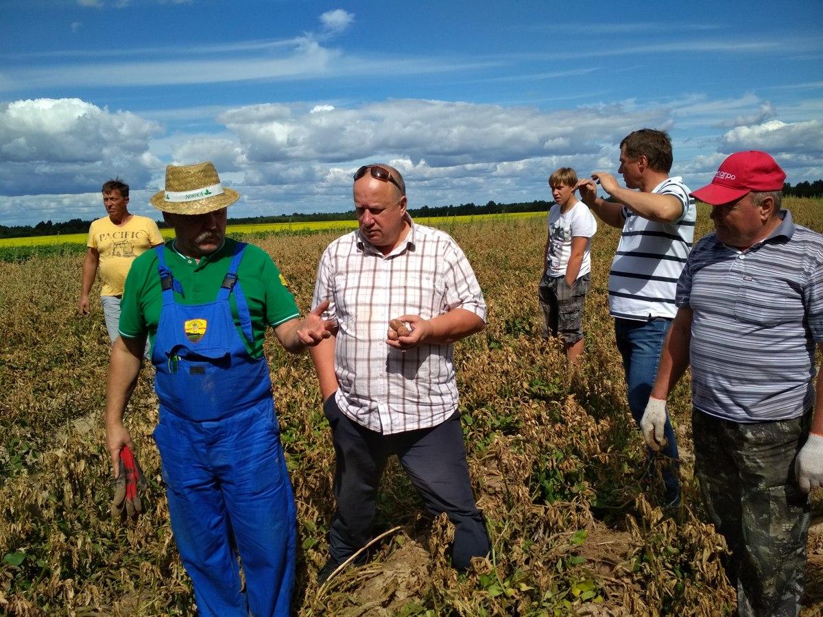 Картошка из пробирки. В Ярославской области осваивают уникальную технологию разведения овощей