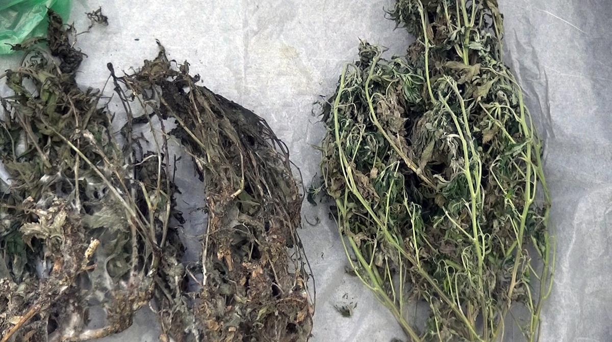 У ярославца нашли мешок с двумя килограммами марихуаны