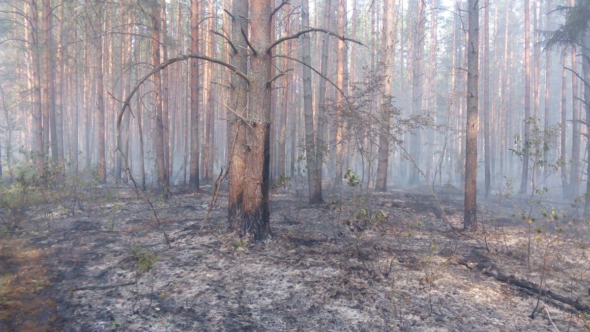 Под Переславлем локализованы два очага возгорания в лесу