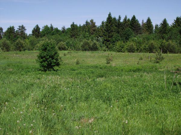 С начала года выявлено 306 нарушений при проверках целевого использования земельных участков