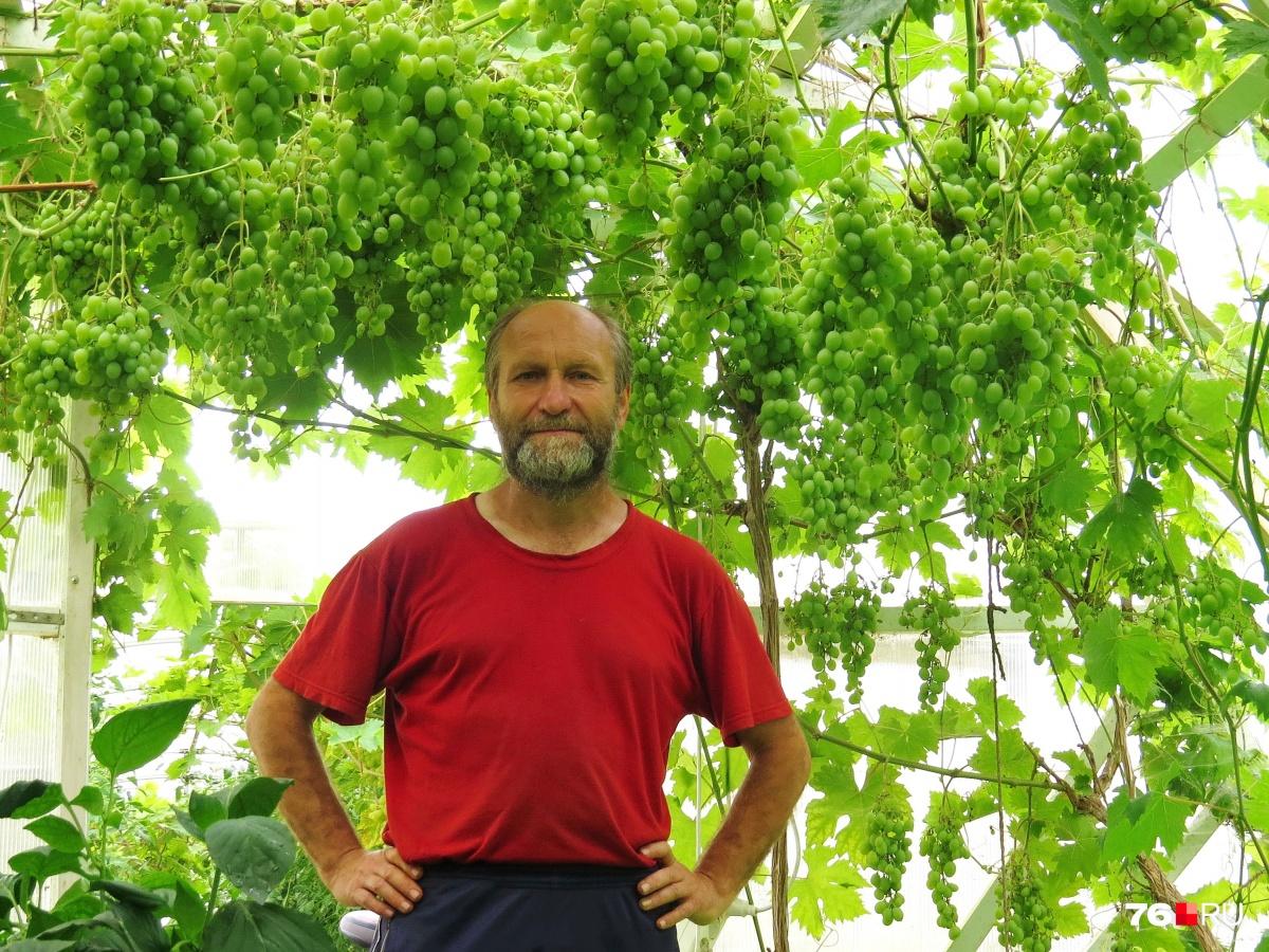 Поднялся на арбузах: ярославский агроном выращивает на даче по пять тонн бахчевых