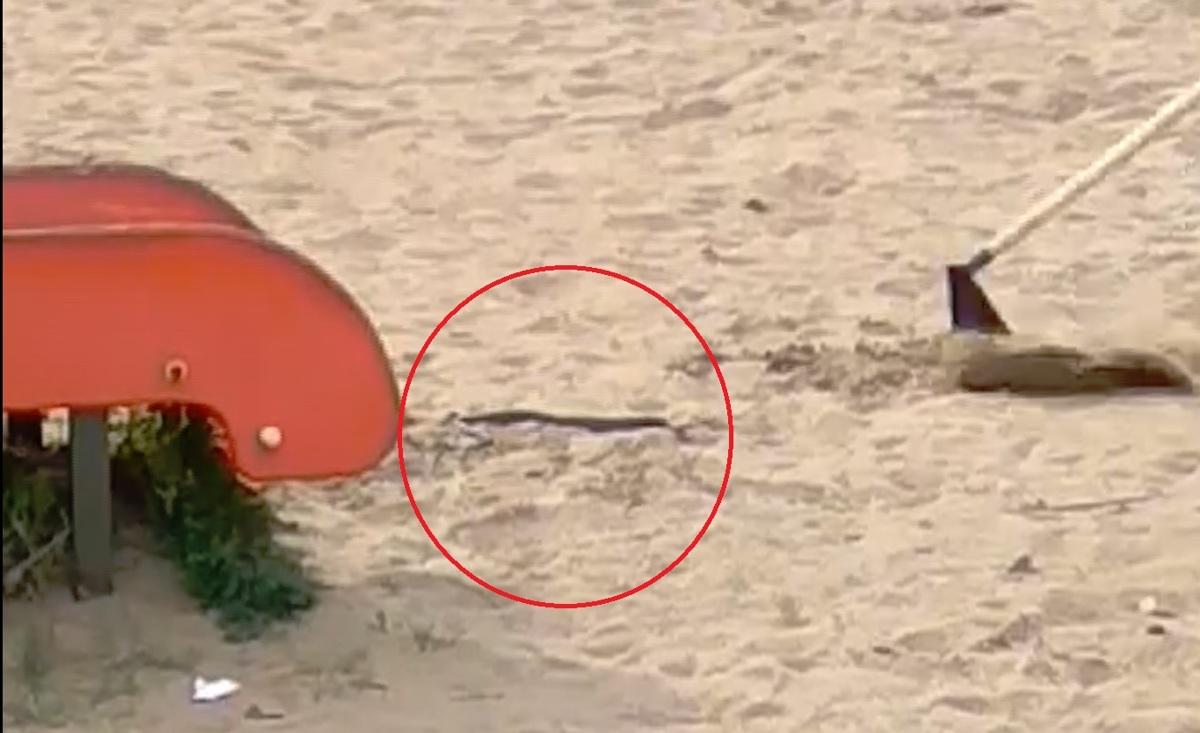 В Ярославле на детскую площадку выползла змея