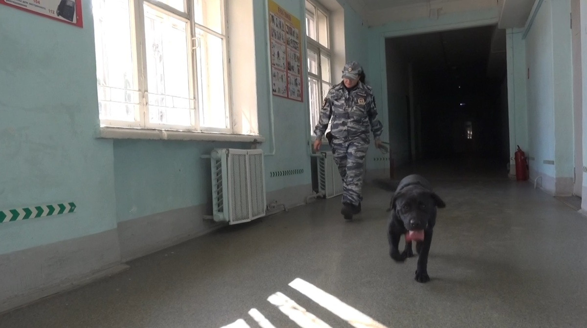 В преддверии 1 сентября ярославские школы проверили кинологи с собаками