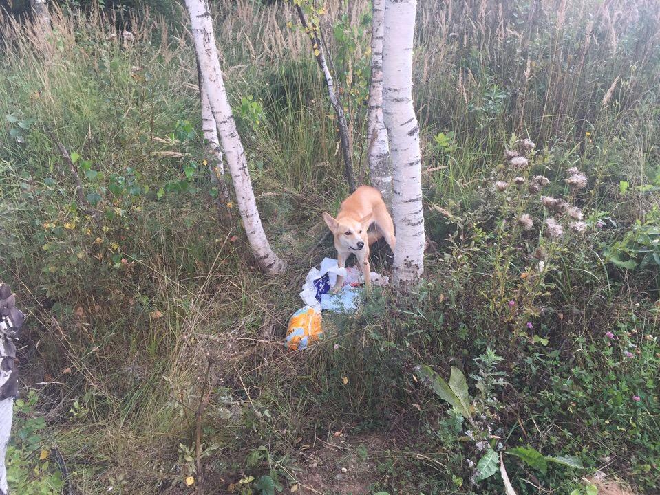 В Ярославле две женщины привязали собаку к дереву и оставили умирать