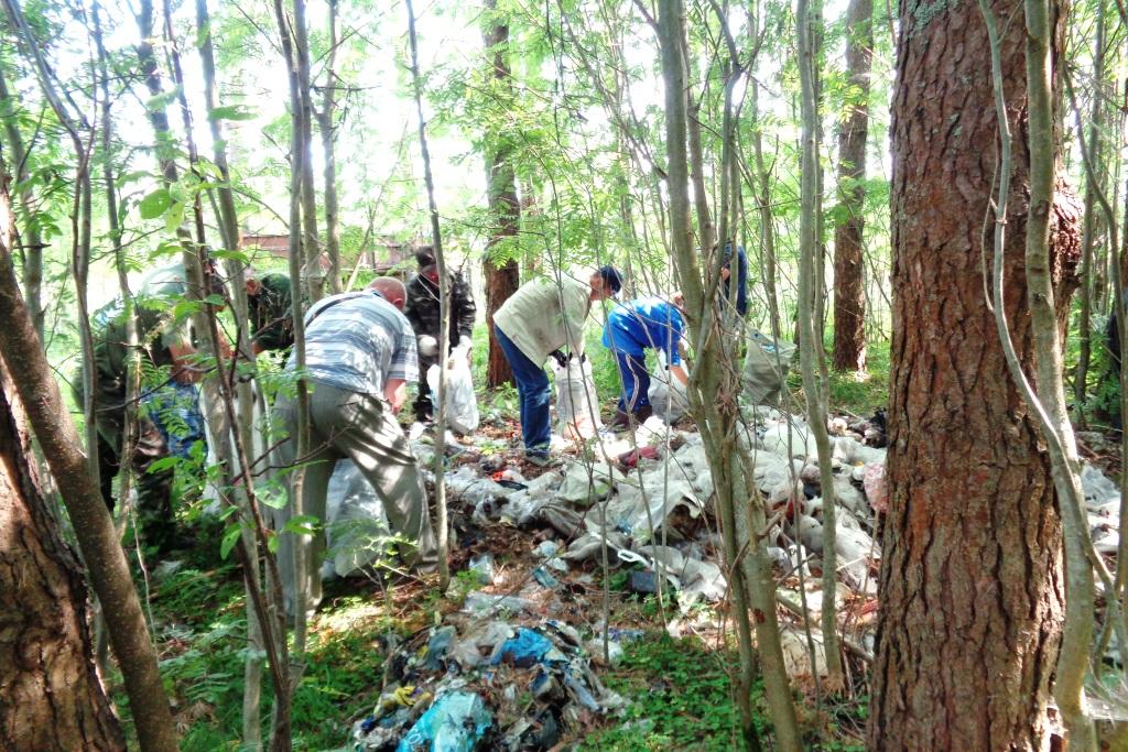В рамках природоохранной акции «Очистим лес от мусора» ликвидировано 100 несанкционированных свалок