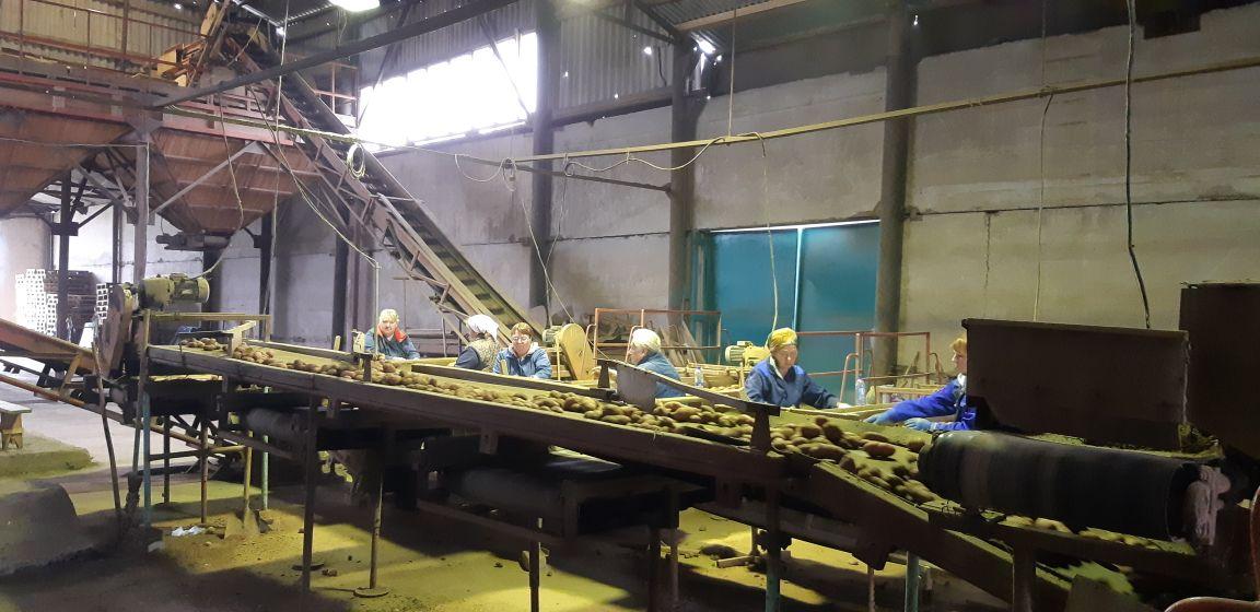 Ярославская область – на втором месте по урожайности овощей открытого грунта в ЦФО