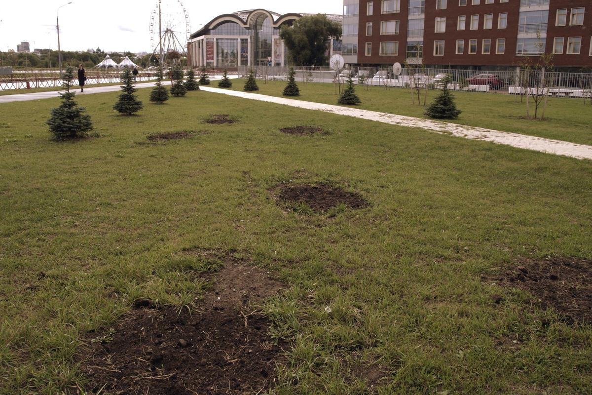 В Ярославле из сквера у памятника военным финансистам похитили 30 яблонь