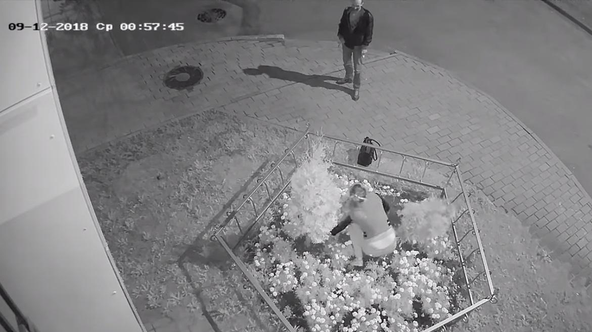 Ярославна из клумбы на проспекте Толбухина голыми руками вырвала тую и скрылась: видео