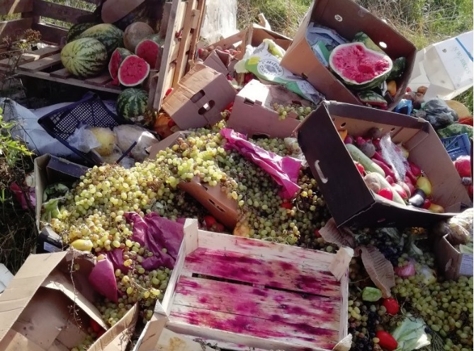В Ярославской области в лесу обнаружили свалку арбузов, винограда и томатов